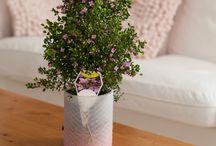 Bloeiende kamerplanten / Veel kamerplanten hebben geen of onopvallende bloemen, hier vind je planten met mooie kleurige bloemen