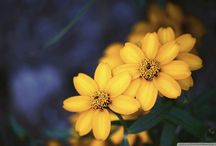Flores, Flores e Mais Flores...