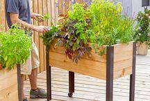 záhrada-zelenina