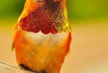 birds,owls,colibris,tukans and parrots