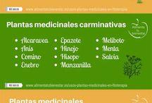 Plantas + salud