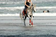 Le Bali / Le Bali est un poney originaire de l'Île de Bali, en Indonésie. Selon des documents manuscrits, le Bali proviendrait probablement du cheval sauvage de Mongolie, mais également des chevaux indiens et des chevaux orientaux apportés par les allemands.