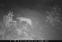 Bush Camera Traps / We set up camera traps around the lodges and in the bush... What we catch is amazing!