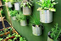 The Vertical Gardening Project / My journey into DIY vertical gardening and creating a self-sustaining vegetable garden. Let's see what happens...