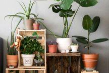 Plants, pots