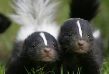 Skunks  / by Marla Moretti Penn