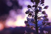 Flower or plant