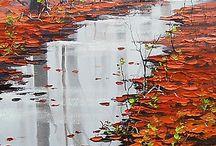 Art in reflection