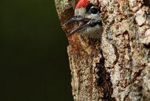Ptáci v lese