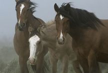 Equine ~ Kindred Wild Spirits / A Regal and Majestic Icon ~Wild Horses / by Carmen Hansen Schwitzer