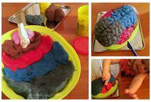 Brain Science Activities