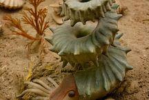 Paleontology & Biology