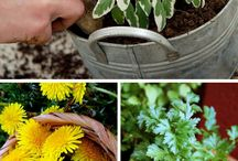 Herbs and healing plants