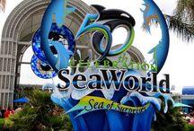 sea world trip