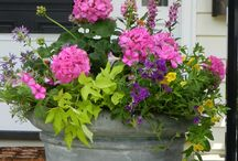 Container Gardening / Inspirational ideas for pots and hanging baskets