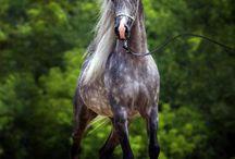 Horses / Mooi lieve paarden