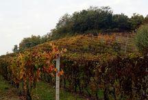 Poderi Girola winery