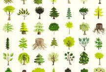 Bomen 2