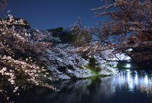 My friend Jun's wonderful pictures / Pictures taken by my friend Jun Furukawa, very talented photographer.