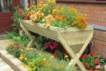 Kwiaty - ogród