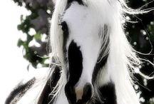 Black &white horses