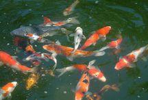 Fish / by Karen Henry Clark