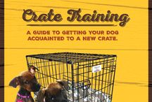 Dog Training / Tips, Tricks, and Need to Knows for training your puppy or adult dog.