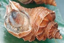 17 Shells - Schelpen