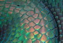 Color - Iridescent