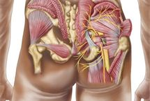 GLUTEAL