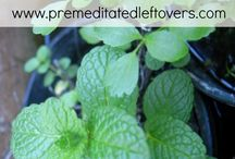 Mint how to grow &I care for