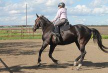 Horses of Fayebrook Farms