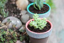 Gardening ideas/tips