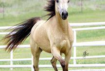 Kone kone kone