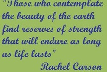 Contemplate--------- / Contemplatabile quotables! / by Susan Lentell