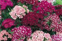 Have blomster / planter / Flottet farver