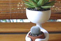 ziment&cactus