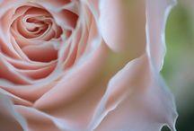 flowers. / by Jihye Ham
