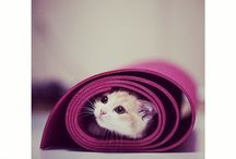 Cat on your mat