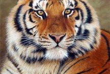 pin it for tigers / by Frederica Depasquale