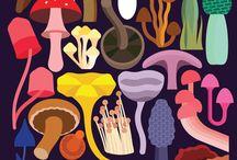 mushroom_collection