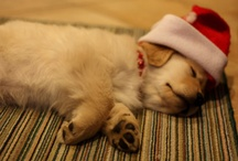 Christmas Cheer / The most wonderful time of the year... / by Janice Chan