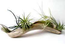 Déco plantes