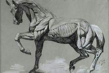 chevalAnat