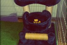 Cat Hotel Budapest / Finally we are OPEN :) VIP cat hotel close to center of Buda.
