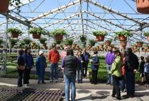 Growing @Al's Greenhouses / als-gardencenter.com