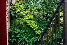 Outdoors - vertical garden
