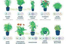 étude américaine sur les plantes