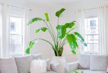 PLANT / PLANTS FOR LIVING