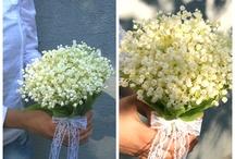 Lacrimioarele mele!!!❤️ / Cele mai frumoase floricele!!